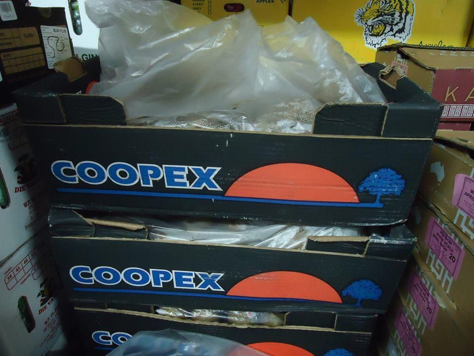 COOPEX KIWI