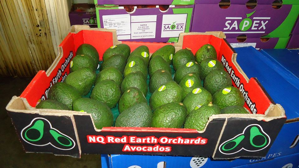 NQ Red Earth Orchards Avocados